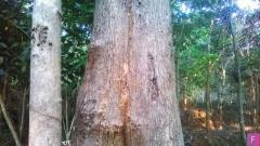 Quality Teak Wood Supplier in Kerala
