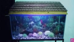 50 Gallon Aquarium in Good Condition for Sale