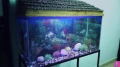 50 Gallon Aquarium in Good Condition for Sale