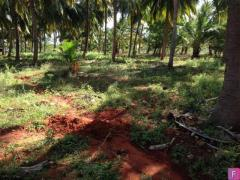 Coconut Farm with Farm House