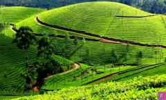 Coffee Estate Near Kodaikanal for Selling